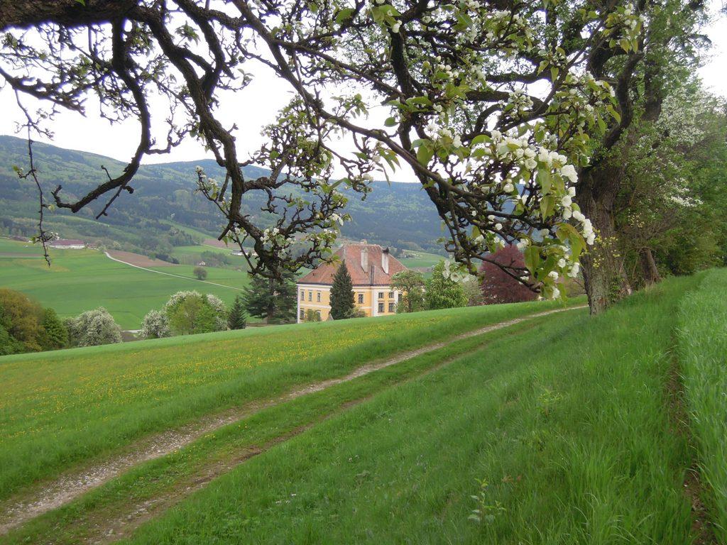 Schloss Roregg im Frühling_WEB